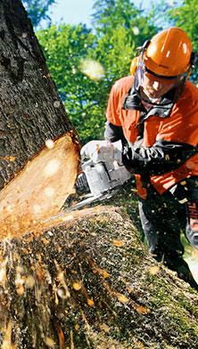 bomenenbessen